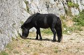 Black horse grazing. — Stock Photo