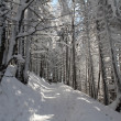 Winter path — Stockfoto