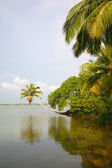 Canals in the Back Waters in Kerala — Stock Photo