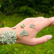 Stock Photo: Lichen on the hand