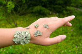 Lichen on the hand — Stock Photo