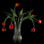 Wilting Tulips — Stock Photo