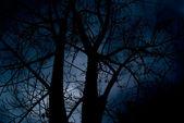 Floresta negra terrível de halloween — Foto Stock