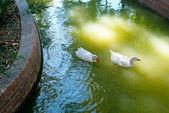 Vita inslag kommer att segla på öppen sjö under — Stockfoto