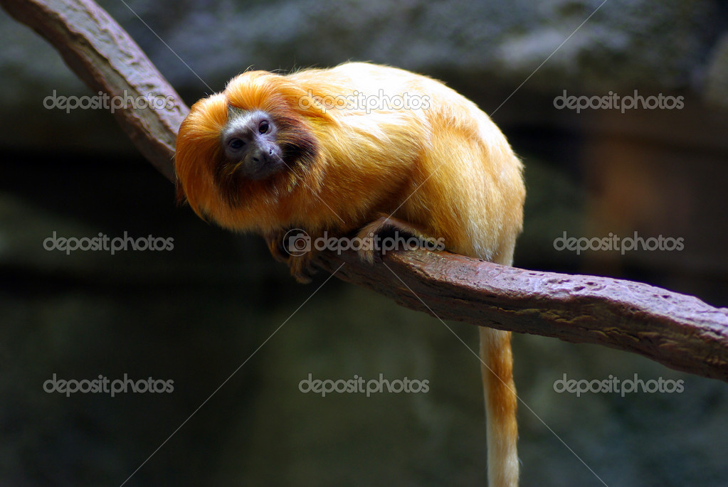 A monkey perched on a tree branch — Stock Photo #8482106