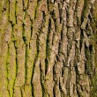 Old oak bark as background — Stock Photo