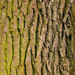 Stock Photo: Old oak bark as background