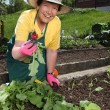 Senior woman gardening — Stock Photo #10560477