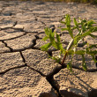Cracked lifeless soil — Stock Photo #8273794
