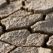 Cracked lifeless soil — Stock Photo #8273805