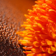 Stock Photo: Beautiful drops of water and orange flower