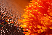 Beautiful drops of water and orange flower — Stock Photo