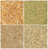 Different grains — Stock Photo