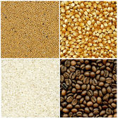 Mustard, coffee, rice and corn backgrounds — Stock Photo