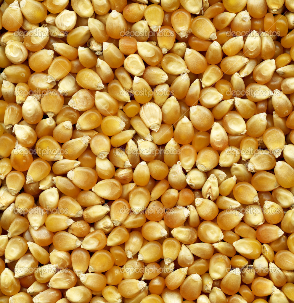 Corn seeds background for your design — Stock Photo #8551827