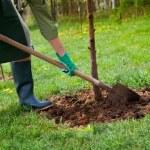 Spring gardening — Stock Photo #10033713