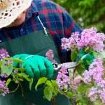 Spring garden concept — Stock Photo #10162681