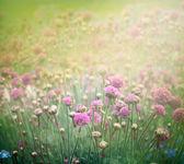 Sfondo floreale di primavera — Foto Stock