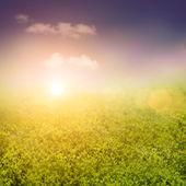весной или летом абстрактный характер фон — Стоковое фото