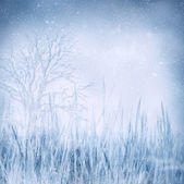 Blurry background with grass — Stock Photo