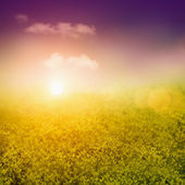 Summer or spring background — Stock Photo