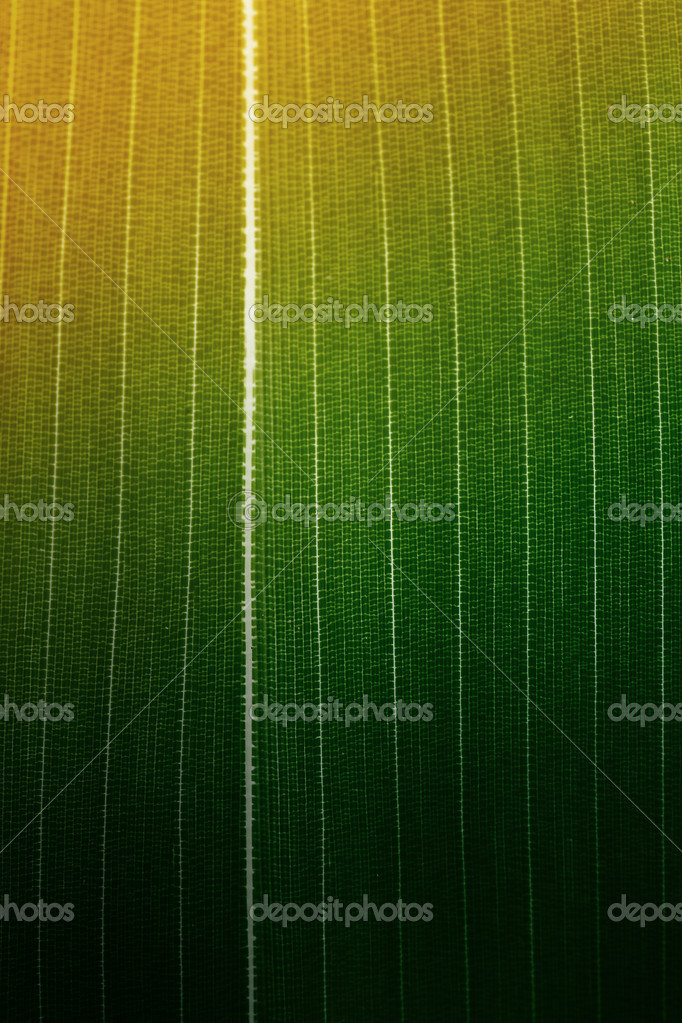 Bamboo leaf background. Extreme macro of bamboo leaf veins — Stock Photo #8866414