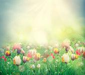 Tulp veld — Stockfoto