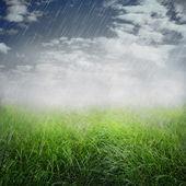 Spring rainy background — Stock Photo