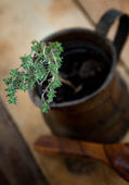 Fresh thyme — Foto Stock