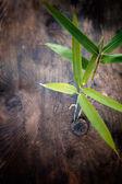 Bamboo leaf — Stock Photo