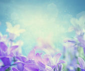 Campanula floral background — Stock Photo