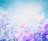 çan çiçeği çiçek arka plan — Stok fotoğraf