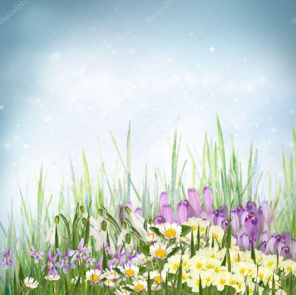 Inizio di primavera Sfondi