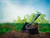 Plantio de ervas — Fotografia Stock