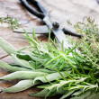 Freshly harvested herbs - Foto Stock