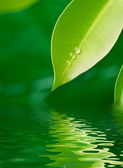 Green leaf under water — Stock Photo