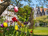 Tulips in the Begijnhof Court in Amsterdam — Stock Photo