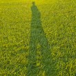 Self Shadow portrait in the grass — Stock Photo