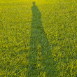 Stock Photo: Self Shadow portrait in the grass
