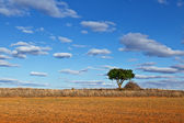 Lonely Tree in a Dry Meadow — Stock Photo