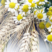 пшеница и маргарита на старый деревянный стол — Стоковое фото