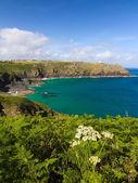 Coastline at The Lizard, Cornwall, England — Stock Photo