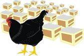 Poule et oeufs — Vecteur