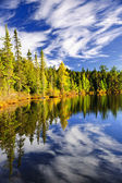 Forest and sky reflecting in lake — Foto Stock