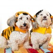 Cute dogs in costumes - Stock Photo