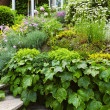 Lush garden at home — Stockfoto