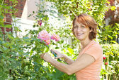 Woman pruning rose bush — Stock Photo