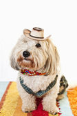 Cute dog in cowboy costume — Stock Photo