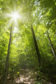 Sunny forest path — Stock Photo