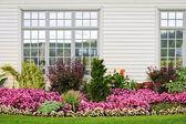Colorful flower garden — Stock Photo